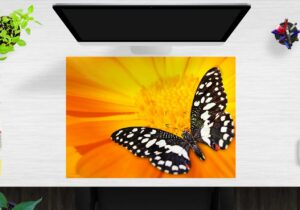 Schreibtischunterlage schwarz-weißer Schmetterling aus Vinyl