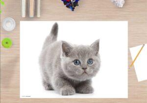 Schreibtischunterlage Süße graue Katze, aus Vinyl
