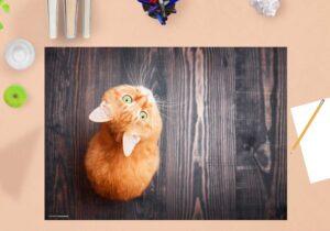 Schreibtischunterlage - Orange Katze - aus Vinyl